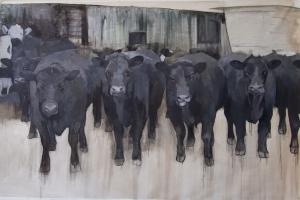 black-cows